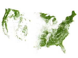 The United States mapped by trees and forests